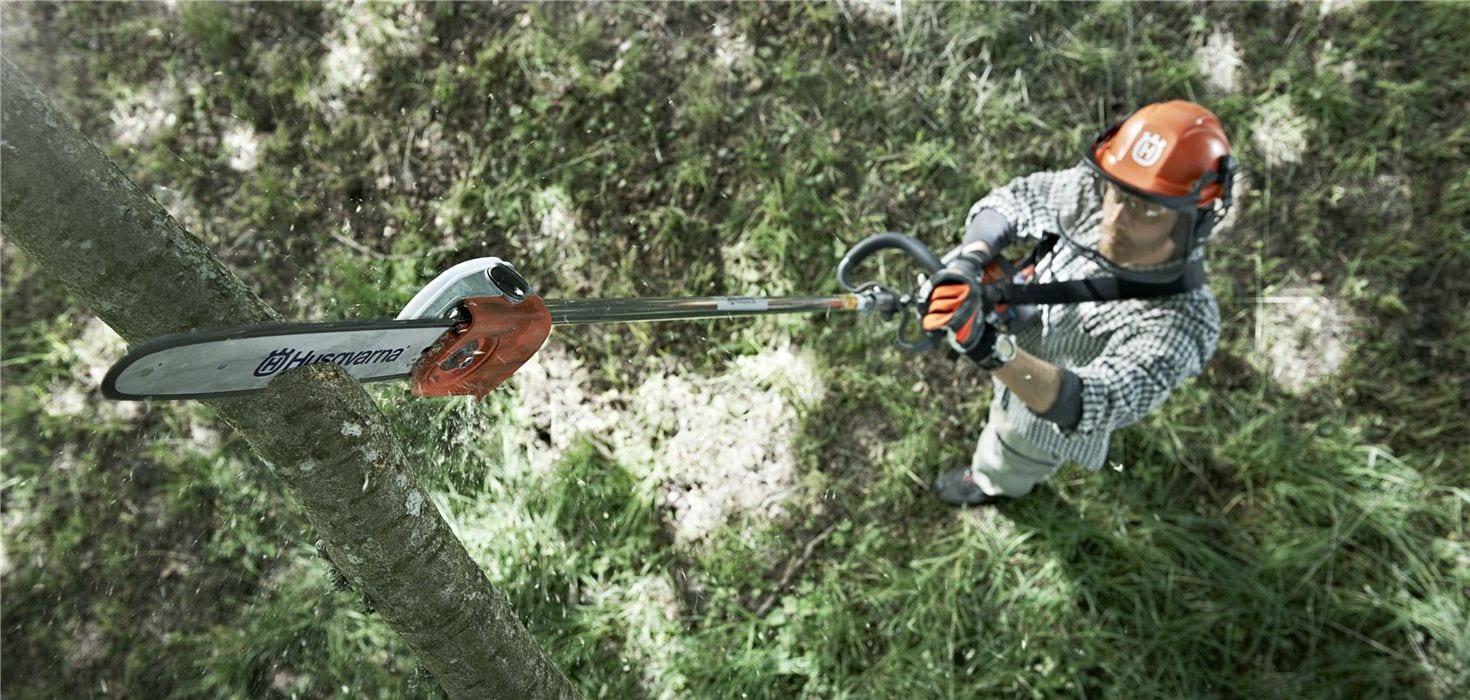 Dichte boomkruinen, hoge takken en dicht loof?
